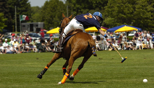 thoroughbred polo ponies polo big pony tote